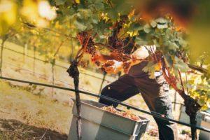 Schwarzwaldweingut Andreas Männle – der Jahrhundertwein übertrifft alle Erwartungen